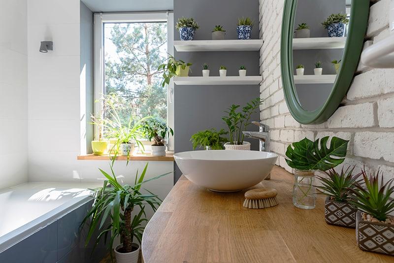 گیاهان مخصوص سرویس بهداشتی